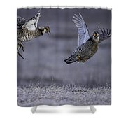 Fighting Prairie Chickens Shower Curtain by Thomas Young