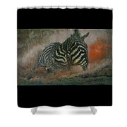 Fighting Zebras Shower Curtain