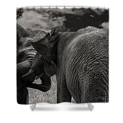 Fiighting Elephants Shower Curtain
