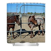 Fillies At The Gate Shower Curtain