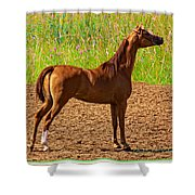 Filly Shower Curtain