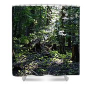 Filtered Sunlight Peace Shower Curtain