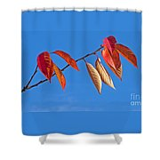 Final Fling Shower Curtain