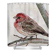 Finch Art Shower Curtain