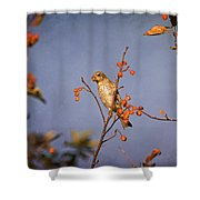 Finch In A Cherry Tree Shower Curtain