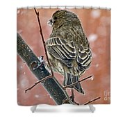 Finch On A Snowy Day Shower Curtain