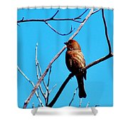 Finch On Branch 031015a Shower Curtain
