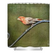 Finch On Guard I Shower Curtain