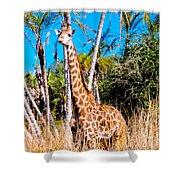 Find The Giraffe Shower Curtain