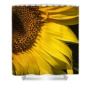 Find The Spider In The Sunflower Shower Curtain by Belinda Greb