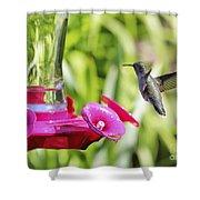 Fine Feathered Hummingbird Shower Curtain