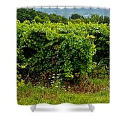 Finger Lakes Vineyard Shower Curtain by Frozen in Time Fine Art Photography