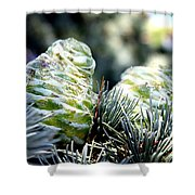 Fir Cone Shower Curtain
