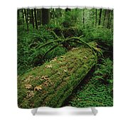 Fir Nurse Log In Rainforest Pacific Shower Curtain