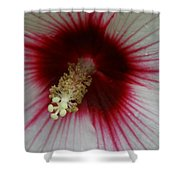 Fire After The Rain Shower Curtain
