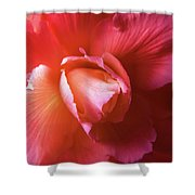 Fire And Ice Floral Begonia Shower Curtain
