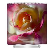 Fire And Ice Rose In Square Format Shower Curtain