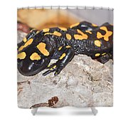 Fire Salamander Salamandra Salamandra Shower Curtain