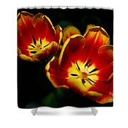 Fire Tulip Flowers Shower Curtain