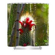 Firecracker Cacti Shower Curtain