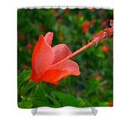 Firecraker Hibiscus Flower Shower Curtain