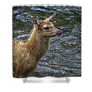 Firehole River Elk Fawn Shower Curtain