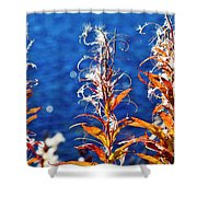 Fireweed Flower Shower Curtain by Heiko Koehrer-Wagner