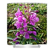 Fireweed In Katmai National Preserve-ak- Shower Curtain