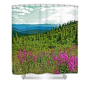 Fireweed Near Top Of The World Highway-alaska Shower Curtain