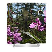 Fireweed Number 10  Shower Curtain