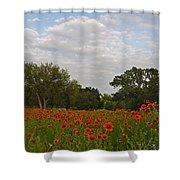 Firewheel Field Shower Curtain