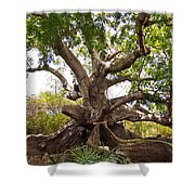 Firmly Grounded Shower Curtain