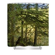 Firs And Ferns Shower Curtain