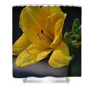 First Bloom - Lily Shower Curtain