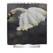 First Blossom Shower Curtain