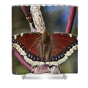 First Butterfly Of Spring Shower Curtain