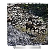 First Day Walking Shower Curtain