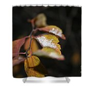 First Dusting Shower Curtain