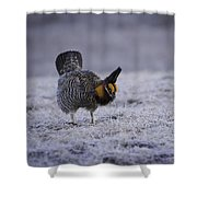 First Light 2 Shower Curtain by Thomas Young