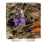 First Spring Flowers Shower Curtain