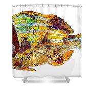 Fish 506-11-13 Marucii Shower Curtain