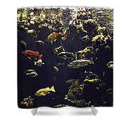 Fish Aquarium Shower Curtain