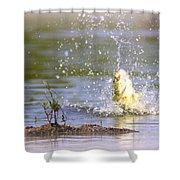 Fish-img-0717-004 Shower Curtain