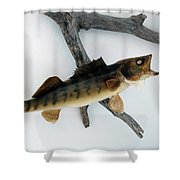 Fish Mount Set 02 A Shower Curtain