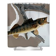 Fish Mount Set 02 C Shower Curtain