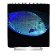 Fish Not For Dinner Shower Curtain