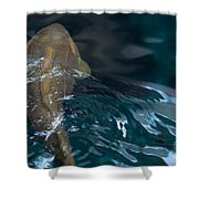 Fish Of The St. Lawrence Shower Curtain