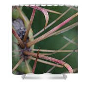 Fishhook Barrel Cactus Spines Shower Curtain