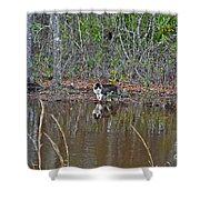 Fishing Feline Shower Curtain