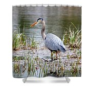 Fishing Heron  Shower Curtain